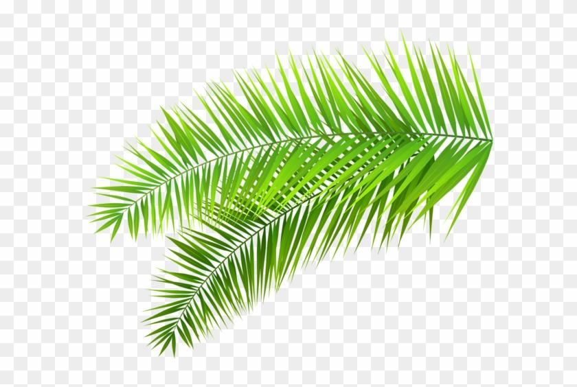 Palm Leaves Decoration Png Clip Art Image Transparent Tropical Leaves Png Free Transparent Png Clipart Images Download 244 transparent png illustrations and cipart matching tropical leaf. palm leaves decoration png clip art