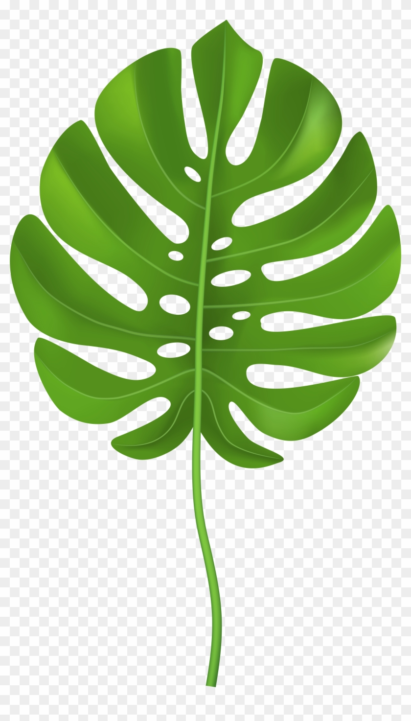 Tropical Palm Leaf Transparent Png Clip Art Image Tropical Leaf Clip Art Png Free Transparent Png Clipart Images Download Choose from over a million free vectors, clipart graphics, vector art images, design templates, and illustrations created by artists worldwide! tropical palm leaf transparent png clip