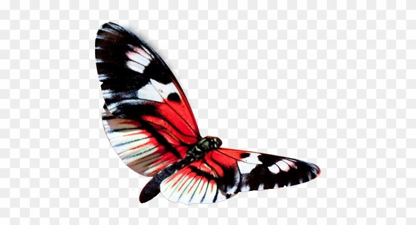 Red Butterfly Png - Hd Wallpaper In Beautiful Butterfly - Free