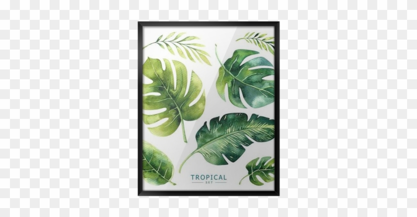 Hand Drawn Watercolor Tropical Plants Set - Tropical Plants Waterclor #397128