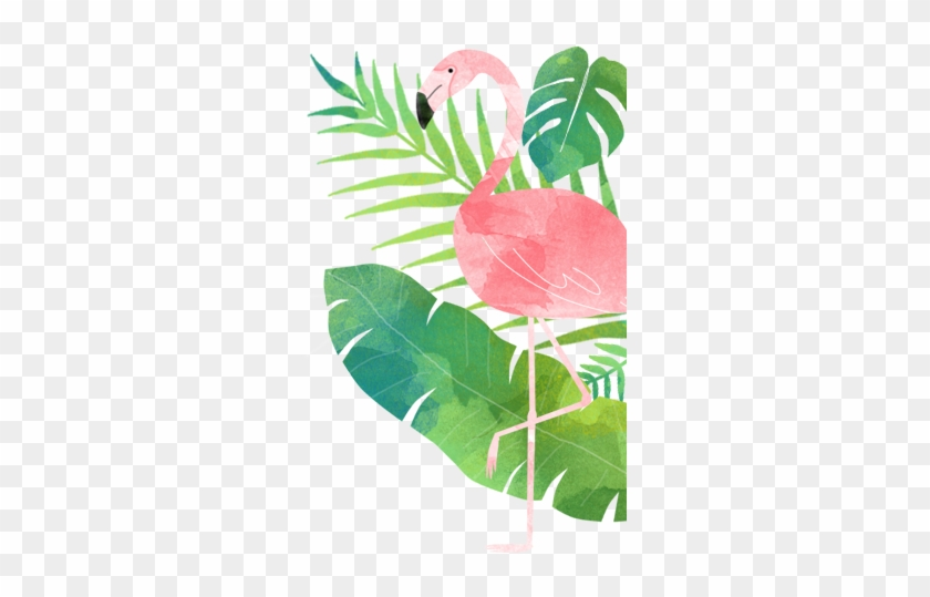 Capitão Zeferino - Tropical Flamingo #397149
