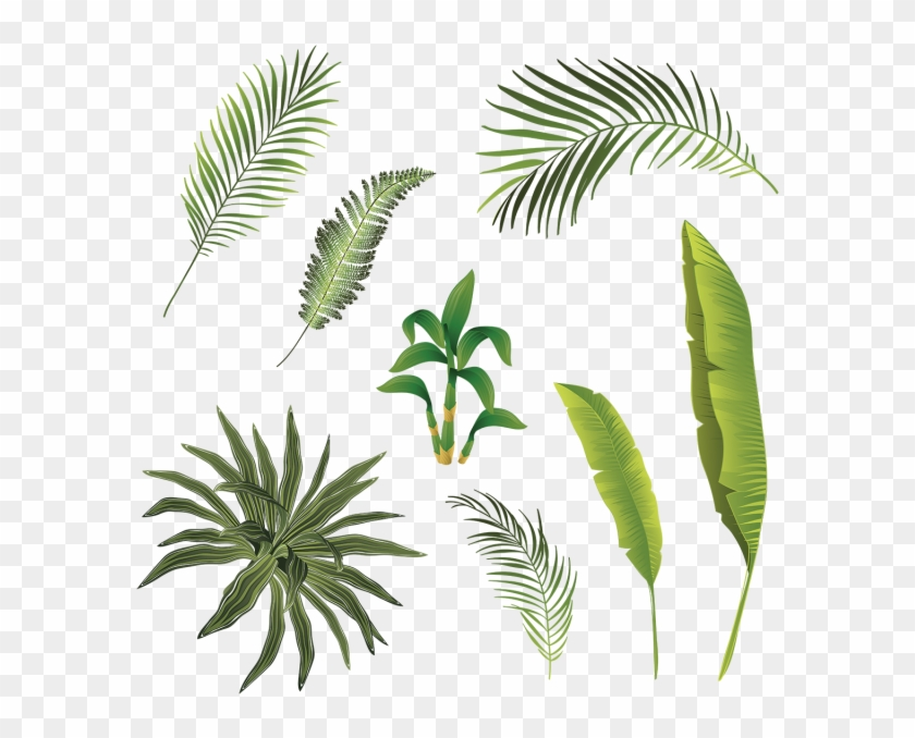 Tropical Branch And Leaves Collection Tropical Tropical Leaf Free Transparent Png Clipart Images Download See more ideas about tropical, tropical leaves, leaves. tropical branch and leaves collection