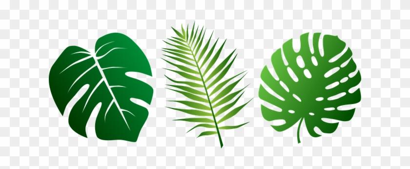 Png Jungle Leaf Transparent Jungle Leaf - Jungle Leaves Png