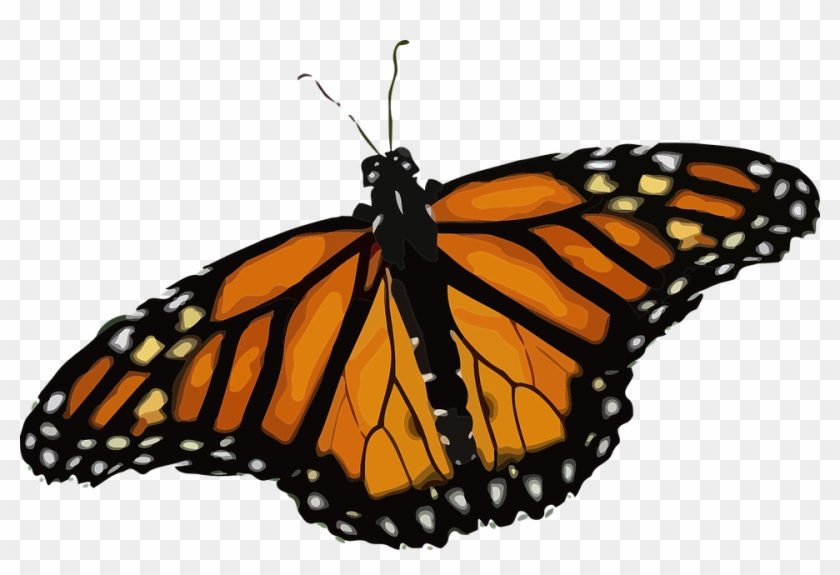 Butterfly, Monarch Butterfly, Danaus Plexippus - Life Cycle Of A Butterfly #399029