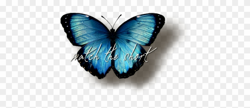 Now Pic Of Butterfly Png Images Transparent Free Download - Blue Butterfly #399228