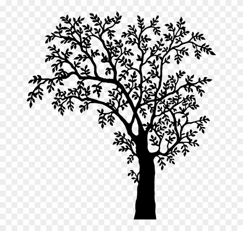 Tree Line Art 17 Tree With Leaves Silhouette Free Transparent
