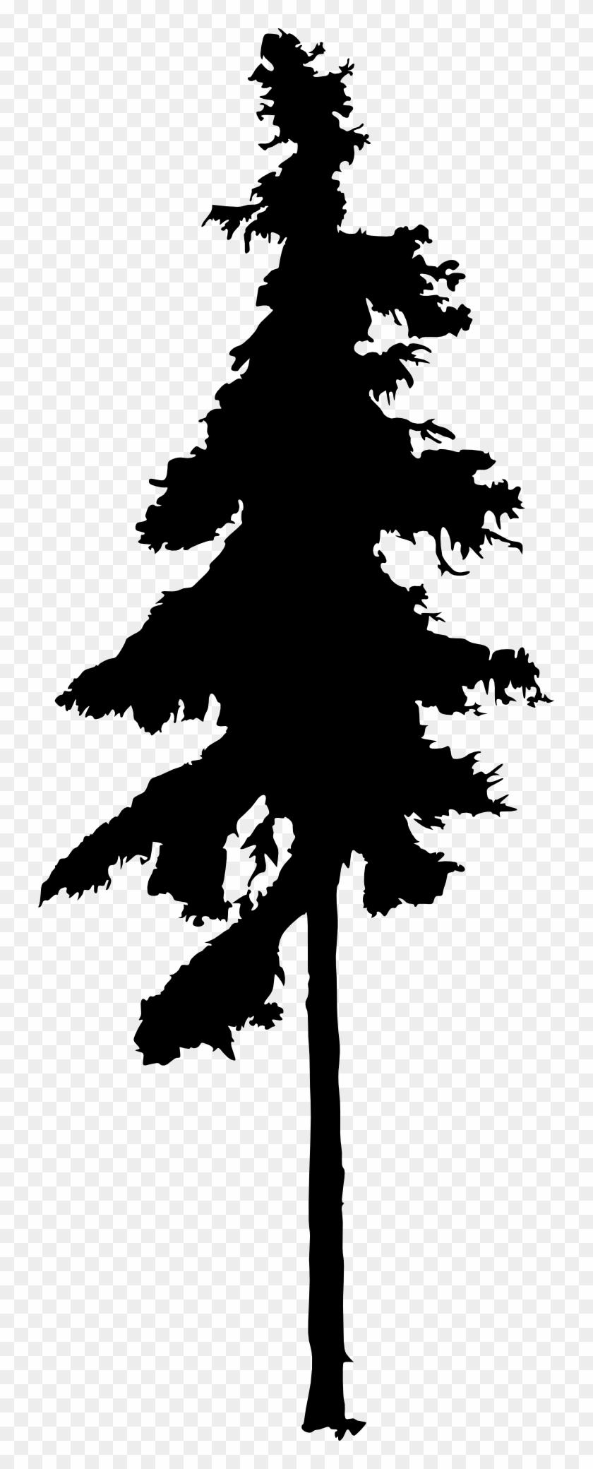 Pine Tree Drawing - Tall Pine Tree Silhouette #401356