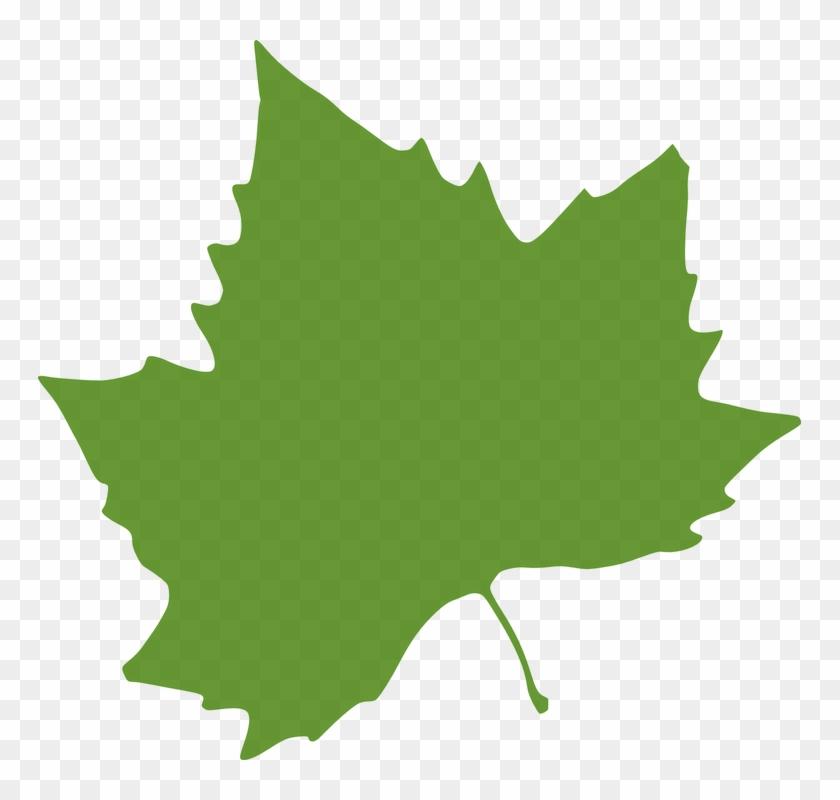 Maple Leaf Clipart Colorful Leave - Autumn Leaves Clip Art #401454