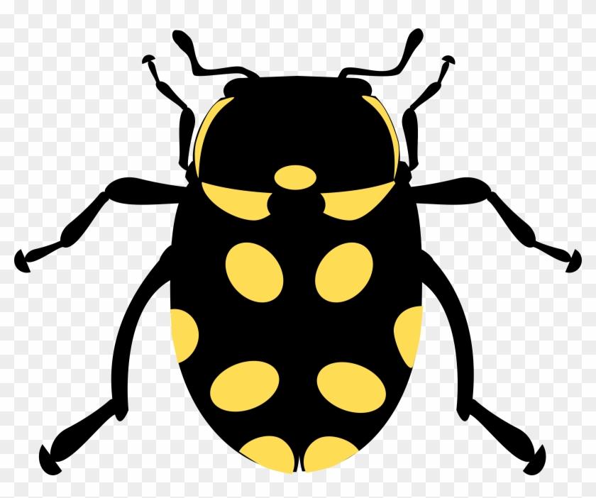 Best Eriopis Canrash Bug Drawing