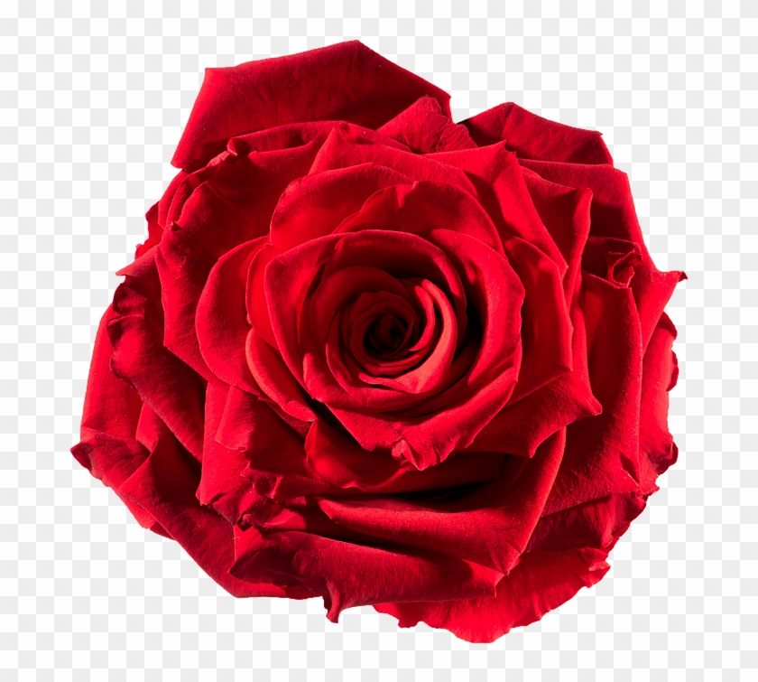 Preserved Rose Red-passion - Roses Pictures To Cut Out #406000