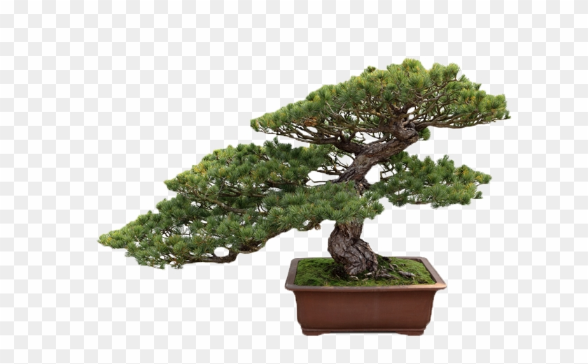 Get Your Balconies Or House Landscaped By Us - Bonsai Tree Transparent Background #406455