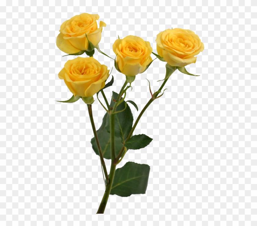 Yellow Rose Flower Free Png Transparent Images Free Pastel Yellow