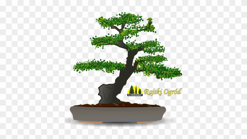 Drzewka Formowane Szczepione I Bonsai Karate Kid Bonsai Free Transparent Png Clipart Images Download