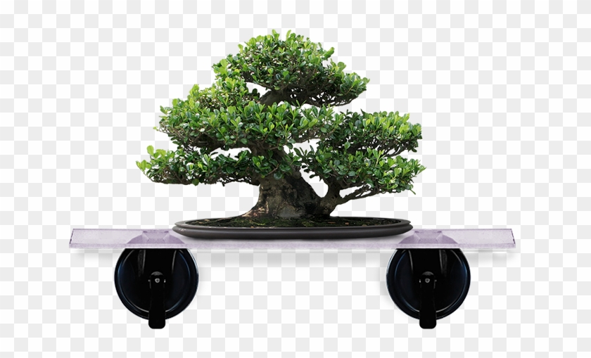 Artificial Bonsai Tree #407677