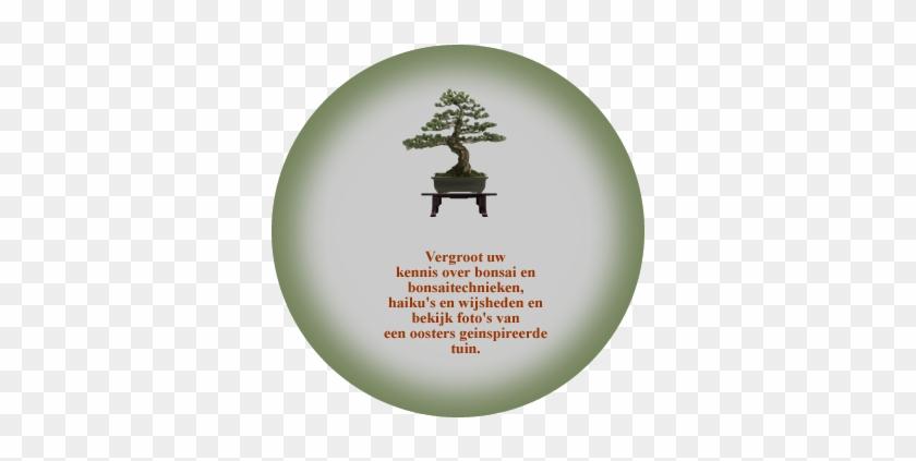 Japanese Bonsai Tree #407718