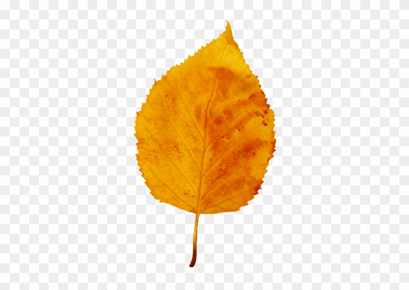 Colorful Fall Leaves Clip Art - Yellow Fall Leaf #408884