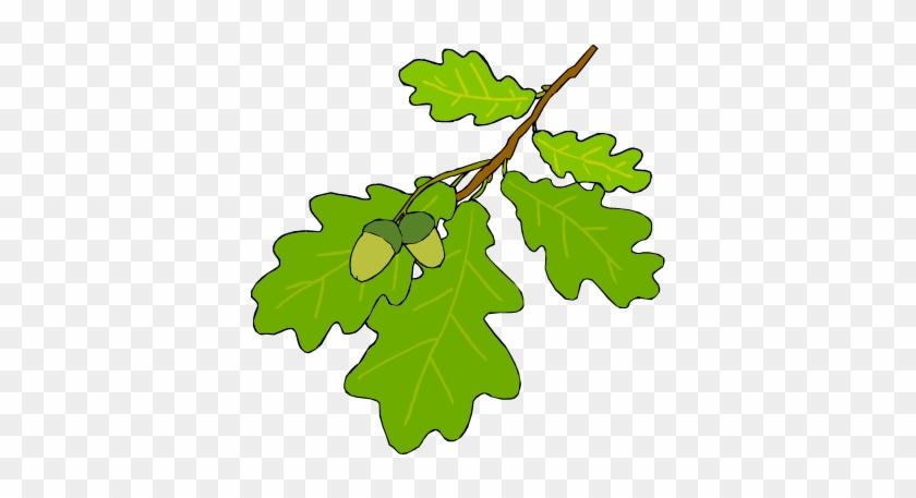 Leaf Identification Oak Tree Leaf Cartoon Free Transparent Png Clipart Images Download