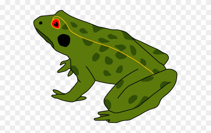 Cycle De La Grenouille, Grenouille - Life Cycle Of A Frog #414942
