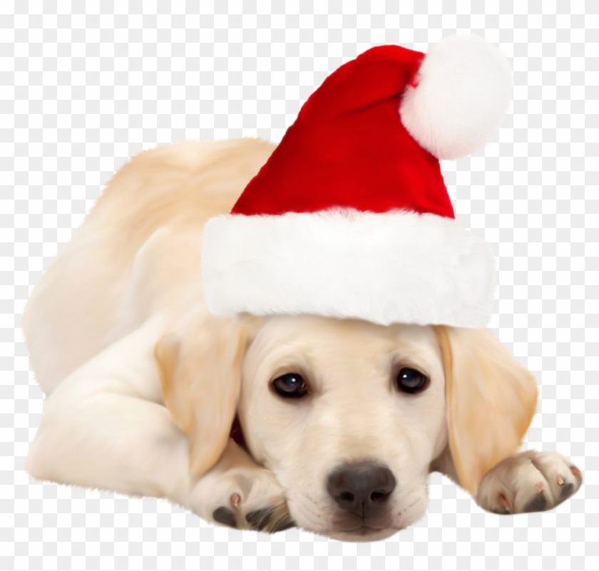 Dog With Santa Hat Png Clipart Best Web Clipart Dog - Golden Retriever Funny Animated Gifs #415681