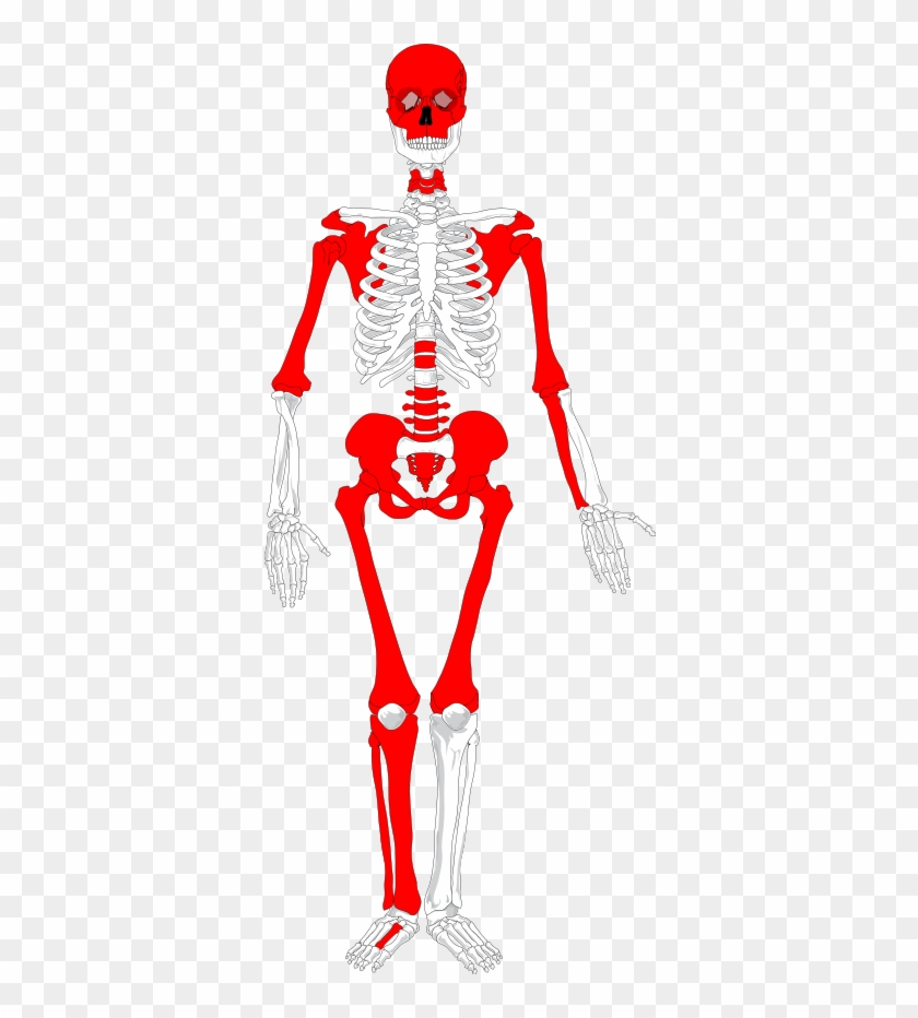 body of undetermined sex was either oversampled, lacked - human skeleton  diagram no labels