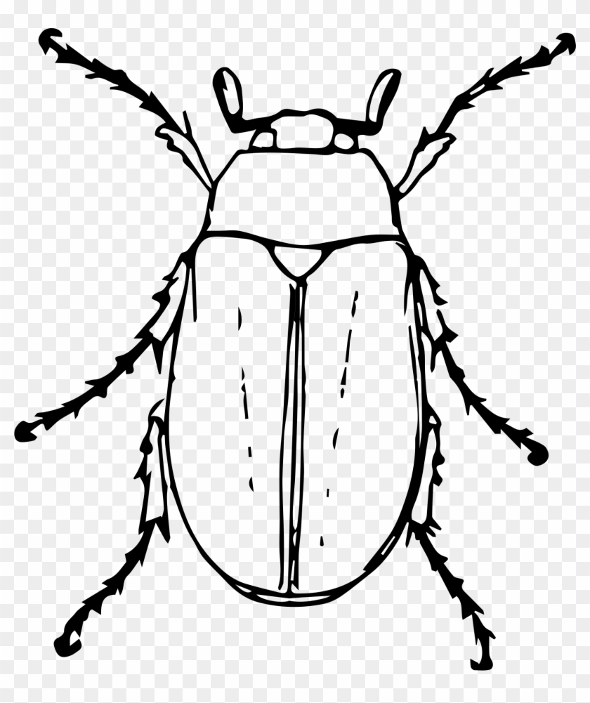 Big Image - Beetle Clipart Black And White #419766