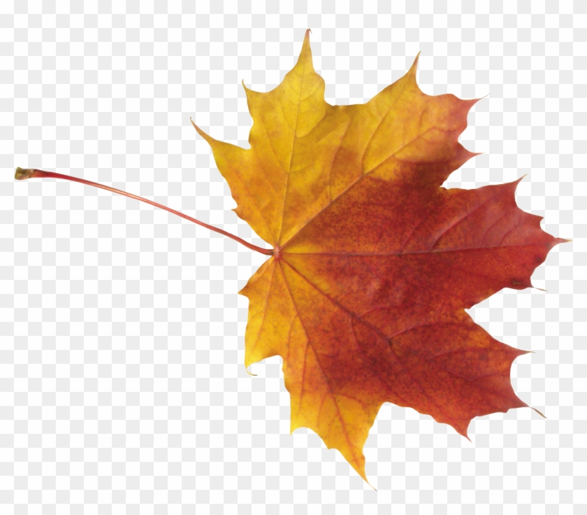 Autumn Leaves High Quality Png - Autumn Maple Leaf Png #419813