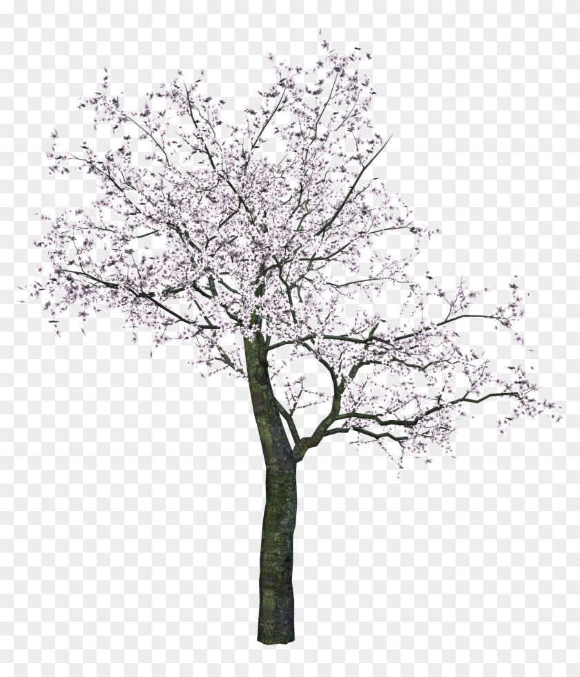 Tree Png Image - Cherry Blossom Tree Render #420422