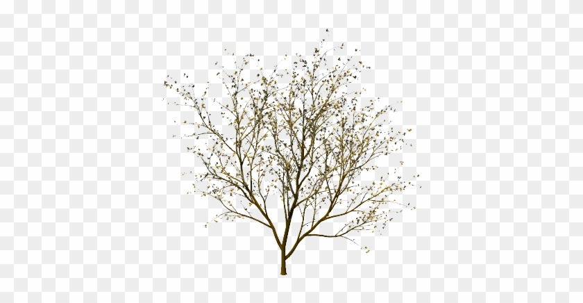 Tree Without Leaves #420428