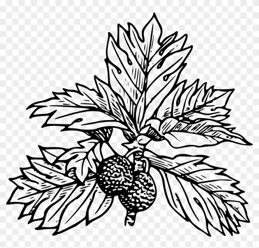 Bread Fruit Clipart, Vector Clip Art Online, Royalty