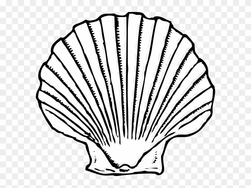 Black And White Sea Shell #420596