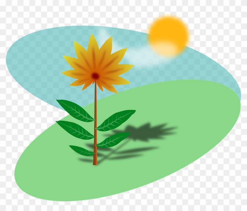 Plant In The Sun #68698