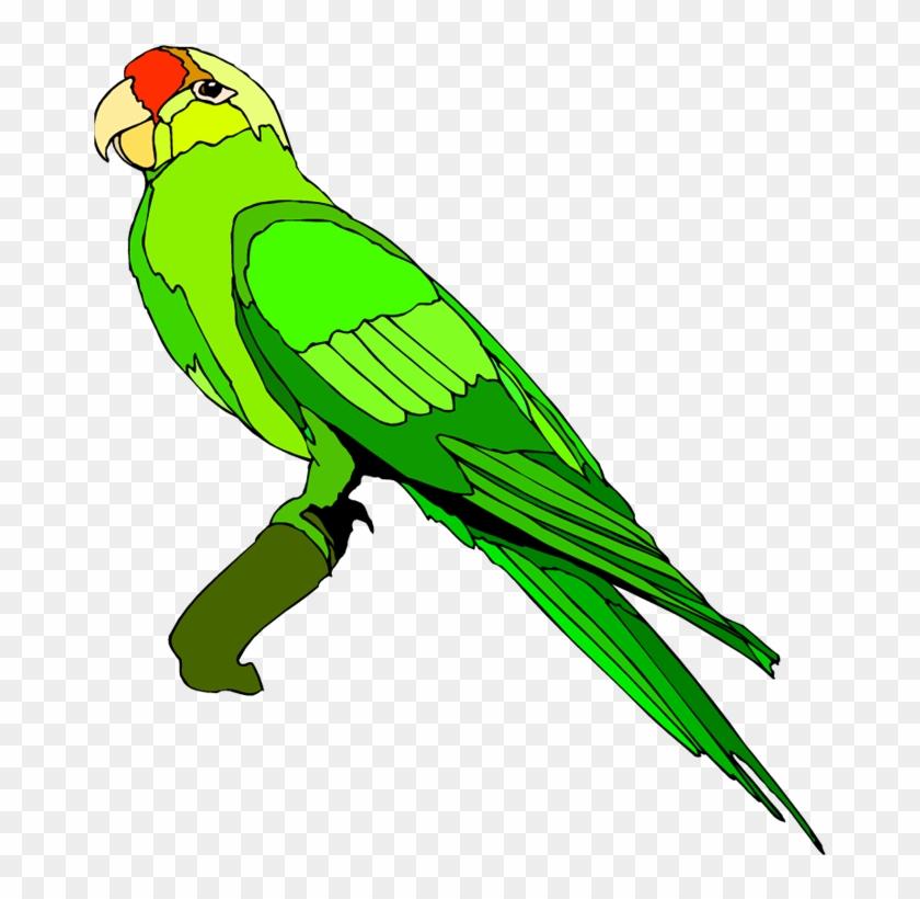 Parrot Clipart Images Parrot Clipart Images Parrot - Parrot Images Clip Art #68993