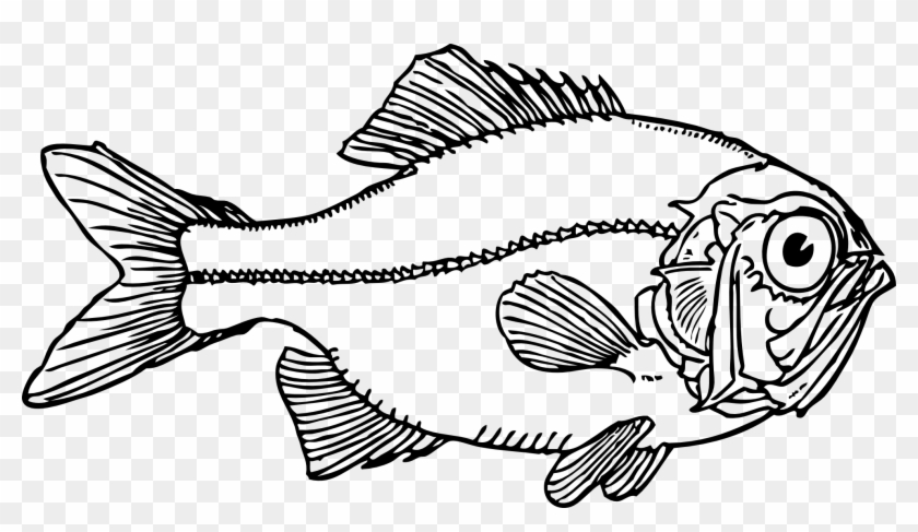 Ugly Fish Black White Line Art Coloring Book - Fish Clip Art #69056