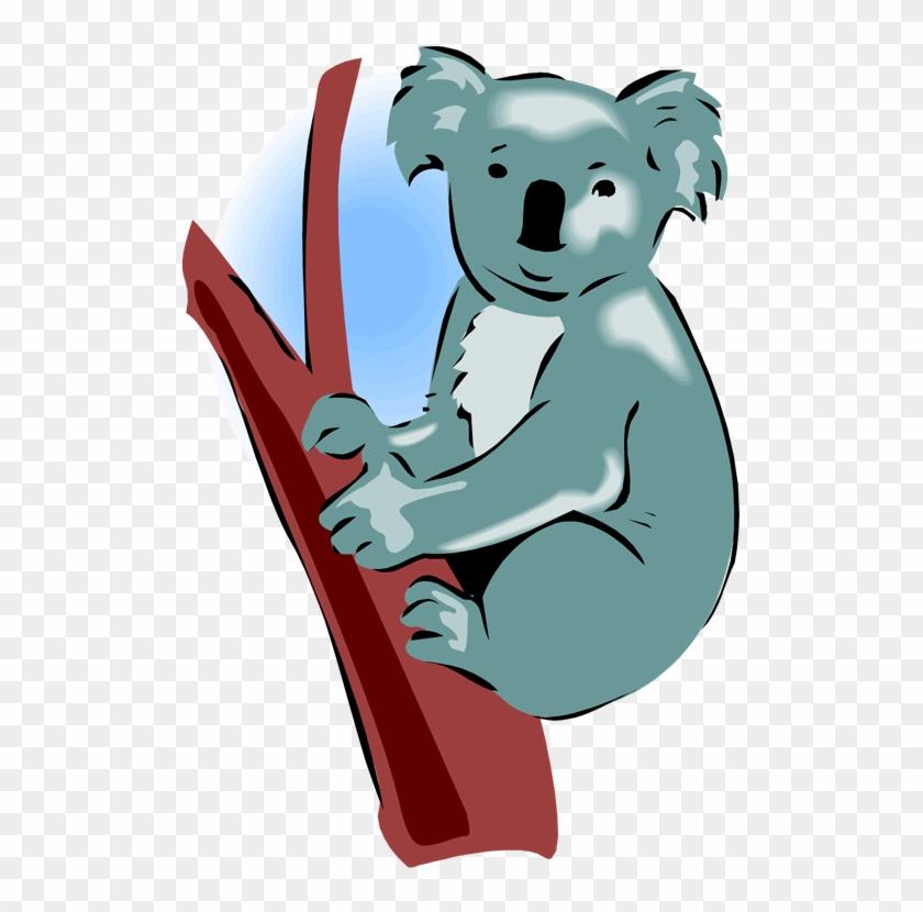Koala Bear Clipart - Koala #69336