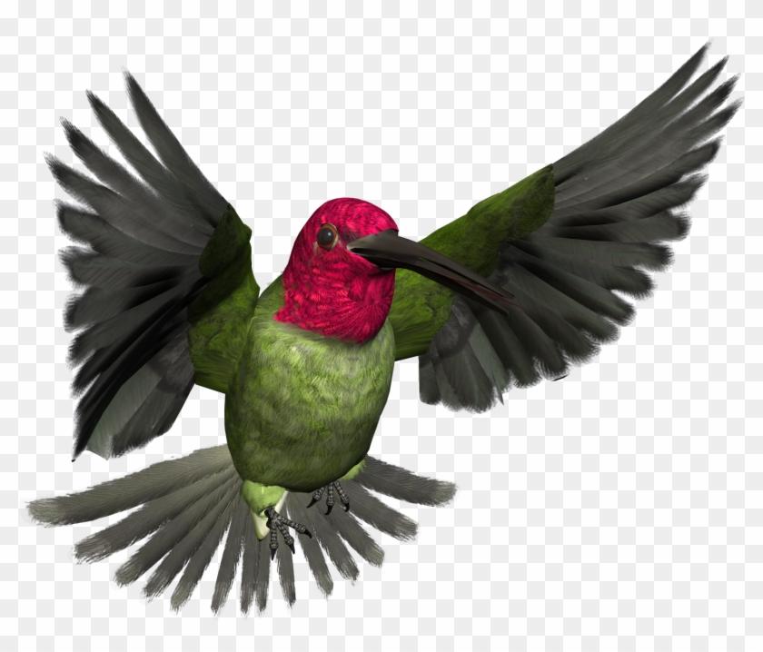Free High Resolution Graphics And Clip Art - High Resolution Bird Art #69472