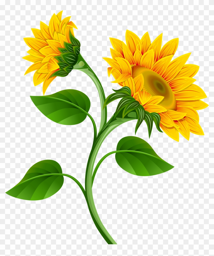 Sunflower Clipart Transparent Background - Sunflowers Clipart Png #71282