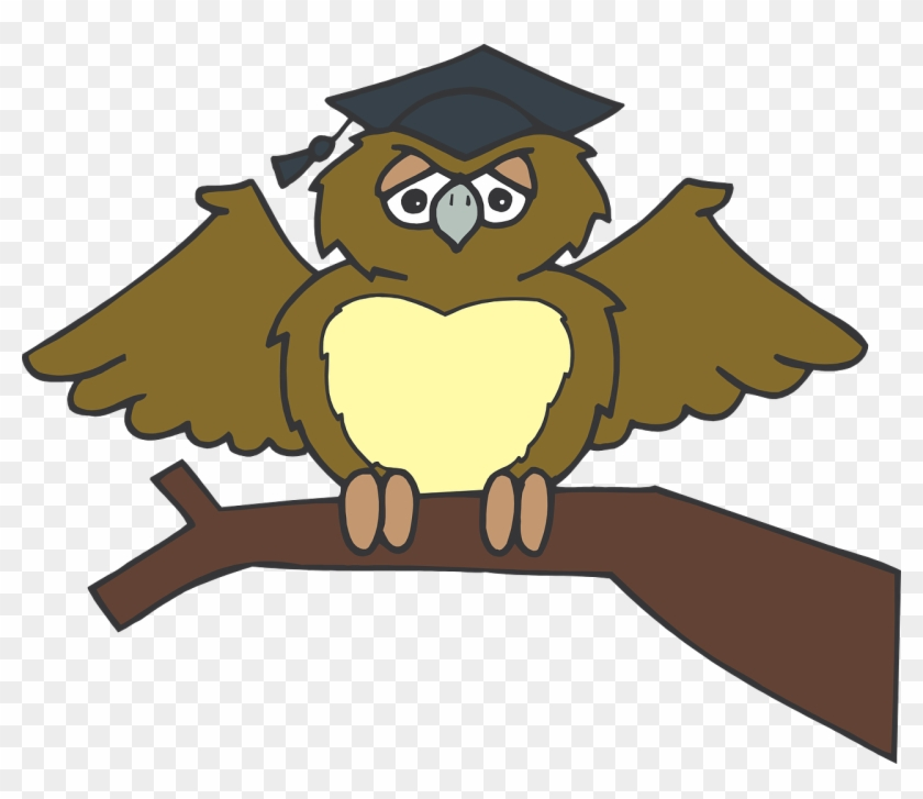 Owl Graduate Sitting Tree Branch Brown Wearing - Owl Graduation Clip Art Png #72796