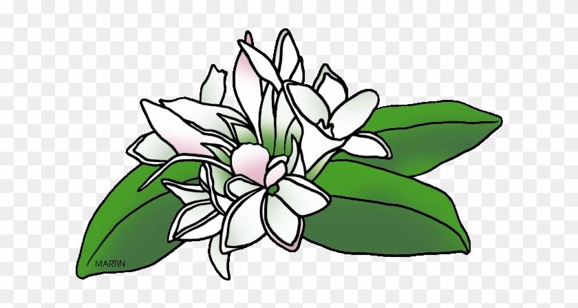 Massachusetts State Flower - Phillip Martin Clipart Flower #74331
