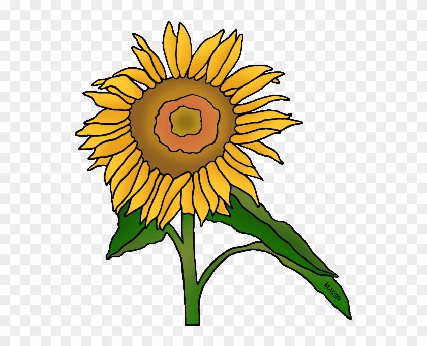 State Flower Of Kansas - Sunflower #74353