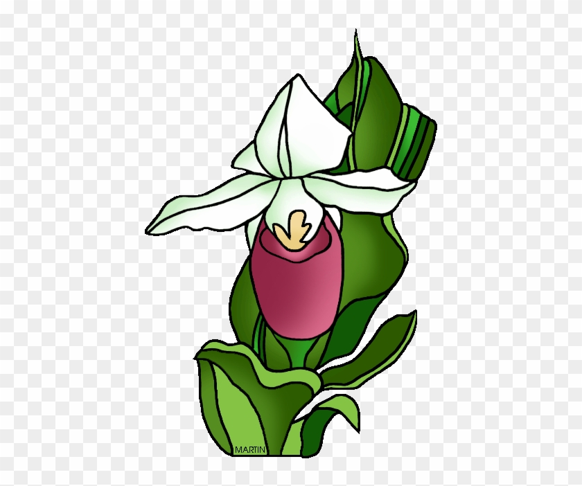 Minnesota State Flower Lady Slipper Clip Art Free Transparent Png Clipart Images Download