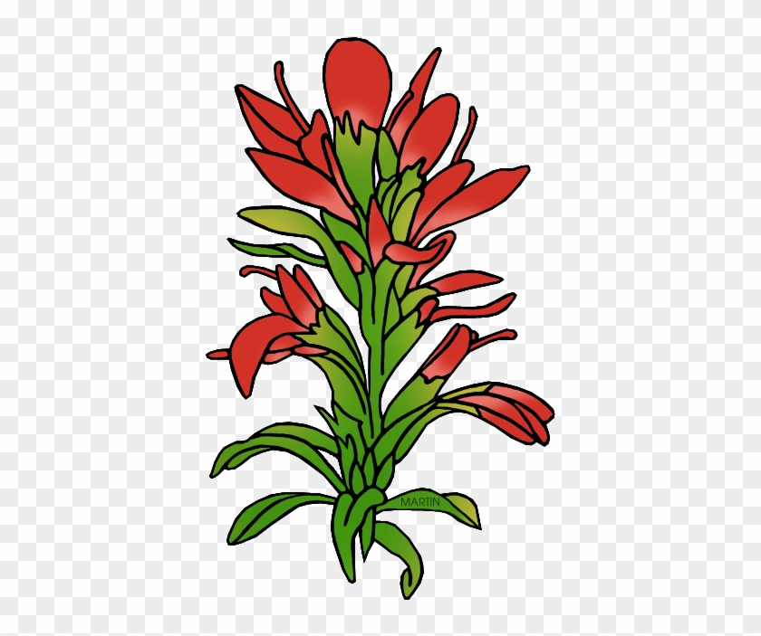 State Flower Of Wyoming - Indian Paintbrush Flower Clipart #74553