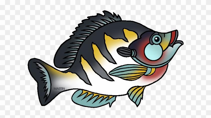 State Fish Of Illinois - Illinois State Fish Bluegill #74562