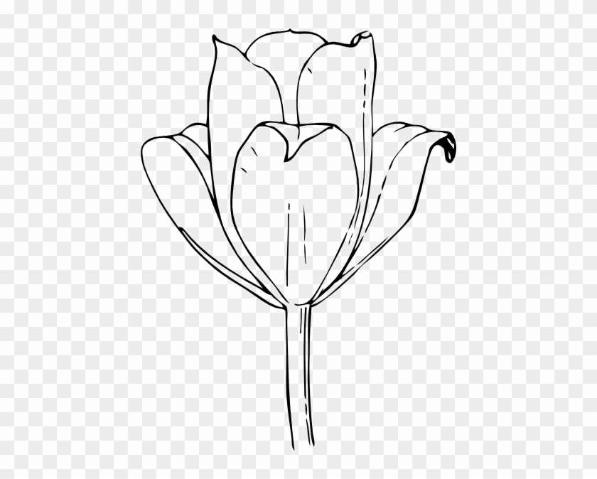 Free Printable Tulip Coloring Pages For Kids (With images ... | 674x840