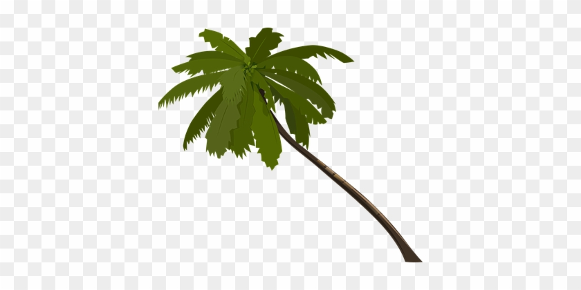 Palm Tree Fronds Trunk Alone Branches Wind - Jungle Trees Clip Art #421698