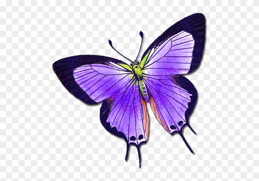 Butterflies 3 Butterflies - Butterfly 512 X 512 #421712