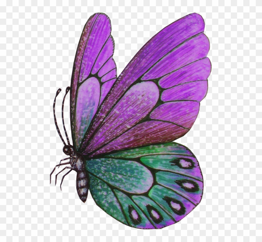 Violet Clipart Papillon Butterfly Free Transparent Png Clipart Images Download
