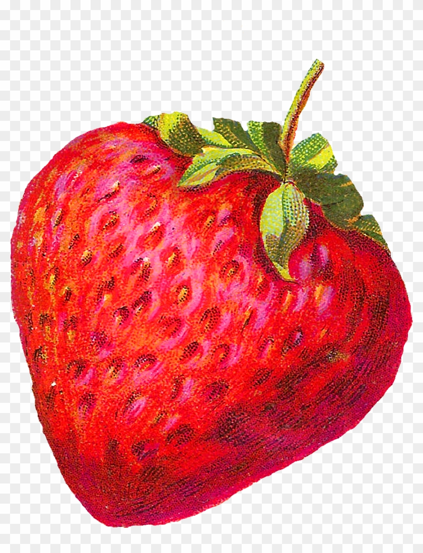 The Fruit Images Would Be Awesome Design Elements For - Vintage Strawberry Clip Art #421881