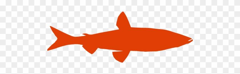 Salmon #422110