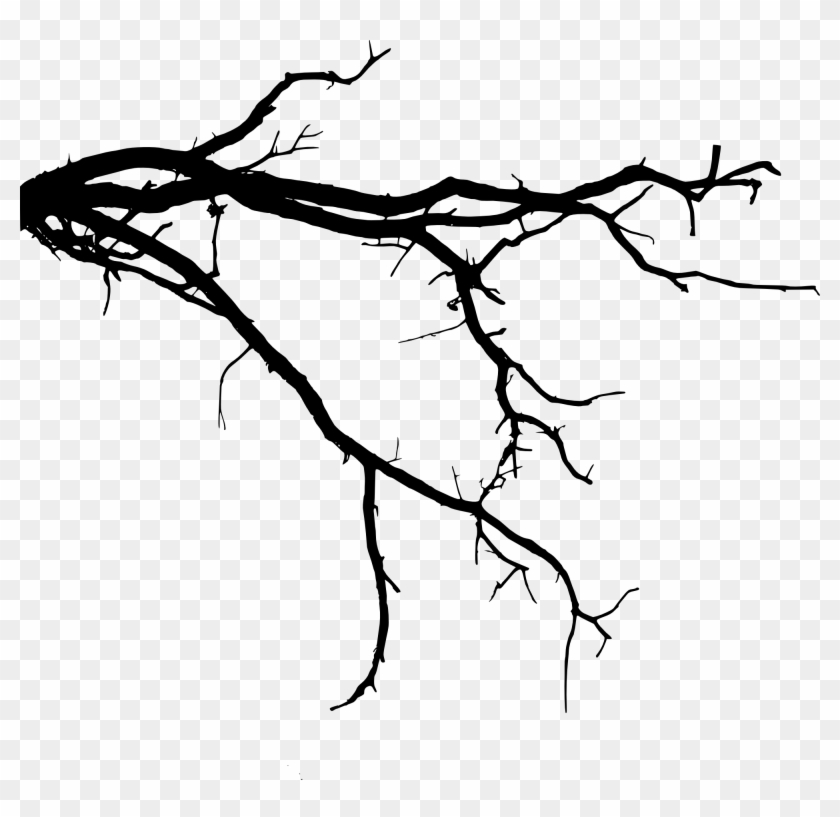 Tree Roots Silhouette Png Download Tree Roots Silhouette - Tree Branch Silhouette Png #422246