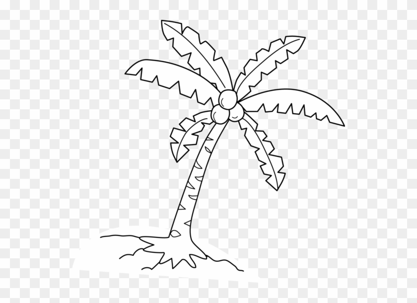 Coconut Tree Black And White Clipart - Coconut Tree Drawing #422316